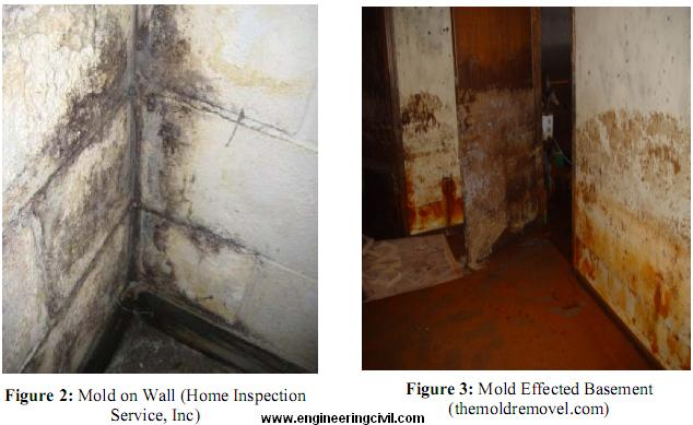 Perfect Moisture And Water Is The Main Culprit For Indoor Problems Including Mold  Growth. Conditions That Are Favourable In Growth Of Mold Spores Are  Temperatures ...