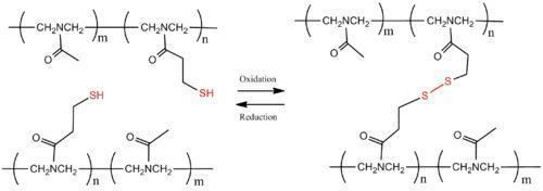 Scheme 5. Reversible polymer cross-linking by disulfide bridges